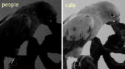 Do Cats And Dogs Have Night Vision